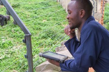 Gorilla Onderzoek
