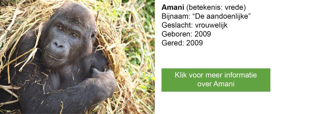 Amani-2
