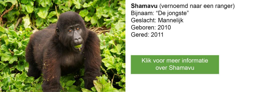 Shamavu-2