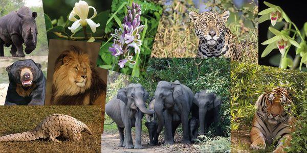 Oproep aan de WHO om de bescherming van bedreigde planten- en diersoorten te garanderen