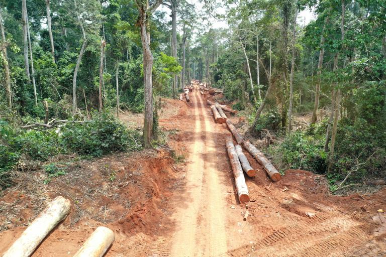 Impact selectieve houtkap