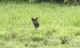 Onderzoek naar de mysterieuze borstroffel