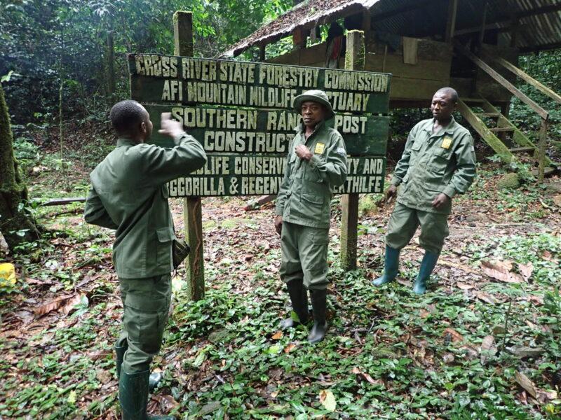 Leefgebied Cross River gorilla staat onder druk